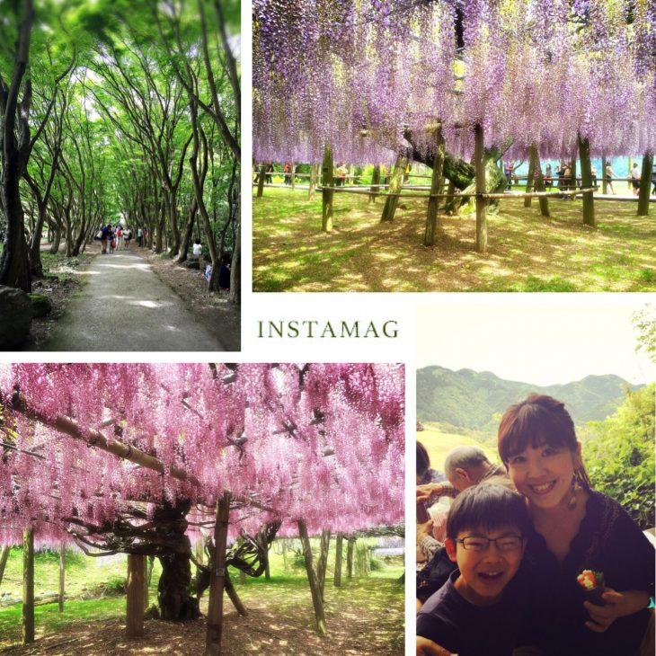 写真 2016-05-06 11 43 37